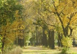 automne_gwendoline-927f1e98291bebb5a5ae36a80f9a496785d533de