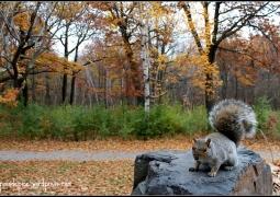autumn-squirel-ccd89b347a4167ef7adfd2a5e883519e85fd316b