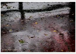 couleur-de-pluie-21-1d0d315fe0be8fc332221b8b95af45cbaa8f0afe