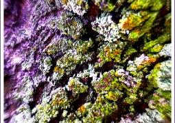 lichen-596045c4804bad5f4932dda482d9e33e319ae80d