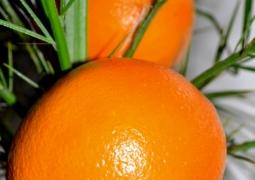 orange2-1c9330f91bd3d64f9566fb2d3bdfed03d52a7fc8