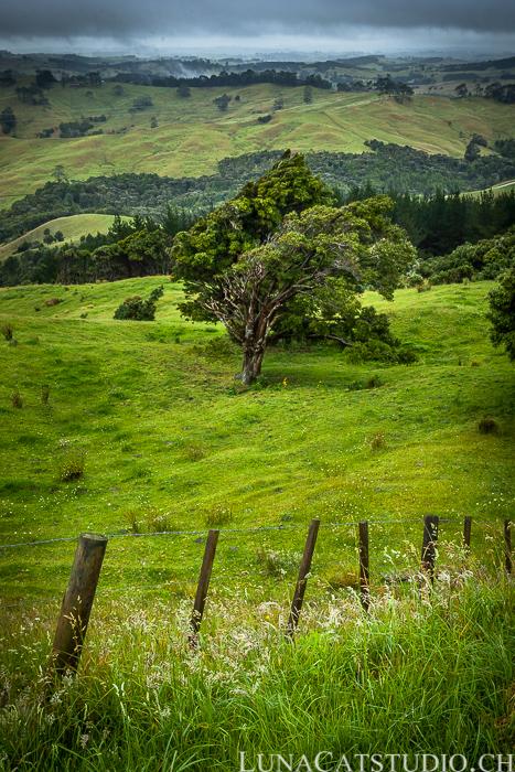 voyage nouvelle-zelande