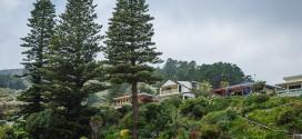Voyage en Nouvelle-Zélande : au sud d'Auckland