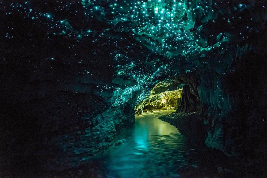 waitomo glowworm caves nouvelle zelande
